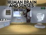 human brain and senses